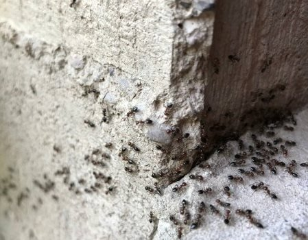 Як позбутися від мурашок в